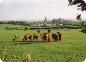 Gallaber Farm - Limousin cattle